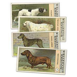 Dogs (23) Edwards, Ringer & Bigg 1908
