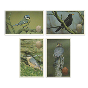 Birds and Their Eggs (72) Emerald Collectables 1996