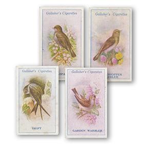 British Birds by George Rankin (100) Gallaher 1923