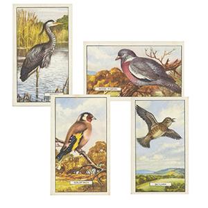 British Birds (48) Gallaher 1937