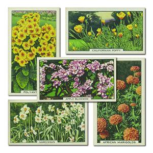 Garden Flowers (48) Gallaher 1938