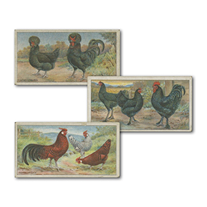 Poultry (50) Ogdens 1915