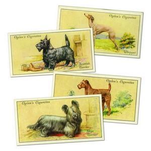 Dogs (50) Ogdens 1936