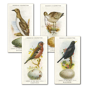 British Birds and Their Eggs (50) Ogdens 1939