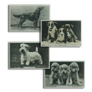 Dogs (48) Pattreiouex 1939