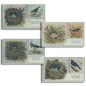 Eggs, Nests and Birds (30) Godfrey Phillips 1912