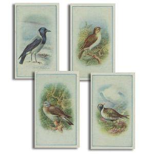 Birds (25) P. J. Carroll 1940