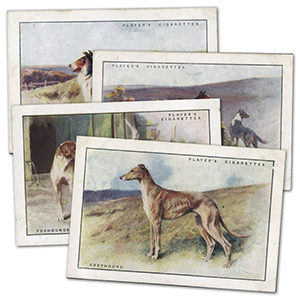 Dogs - Scenic Backgrounds - XL Size (12) Player's 1924