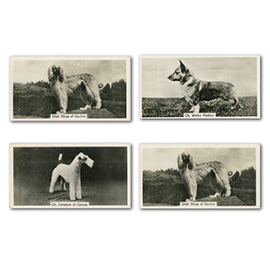 Champion Dogs - A Series (54) John Sinclair Ltd 1938