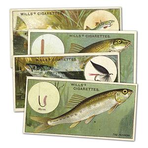 Fish & Bait (50) Wills's 1910
