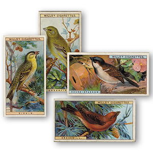 British Birds (50) Wills 1917