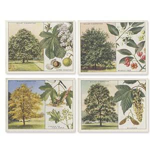 Trees (40) Wills 1937
