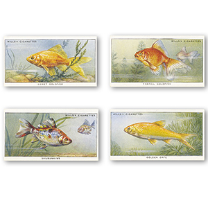 Pond & Aquarium - Second Series (25) Will's 1950