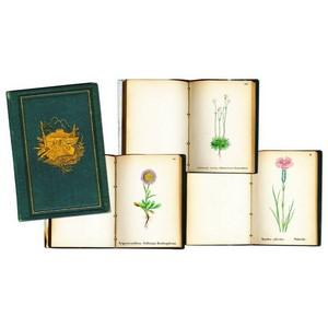 Coloured Books on Alpine Flowers - 1867/68 - Set of 4