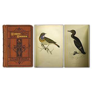 A History of British Birds in 8 Volumes by F. O. Morris
