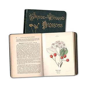 Wayside and Woodland Blossoms - Two Volumes - 1896 First Edition