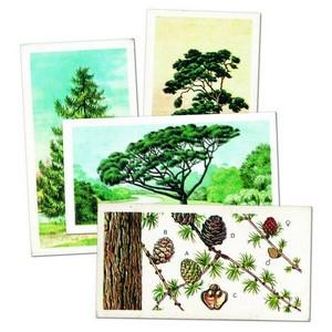 Trees in Britain Brooke Bond Tea Cards