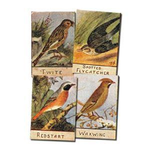 British Bird Series Numbered (99/100) Spratts 1935