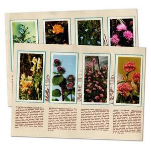 Wild Flowers, Brooke Bond in album (48/50)
