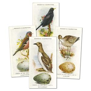 Birds and Their Eggs (50) Ogden's
