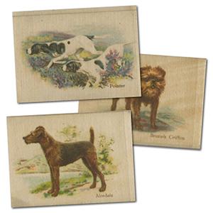 BAT Best Dogs & Their Breed 1913 (L50) Silk Cat £280