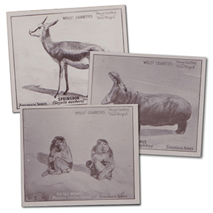 Zoological Series (Large - 50) Wills 1922