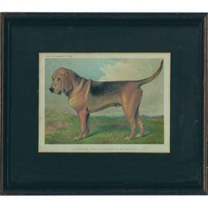 Cassell's Illustrated Book of the Dog - Framed Chromoithograph1881