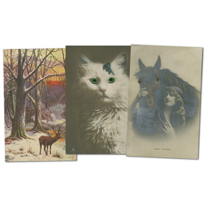 20 vintage animal themed postcards
