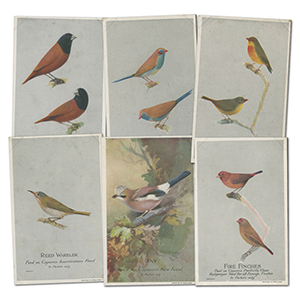 50 Caperns Bird  Food Postcards in album