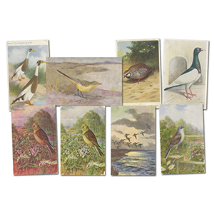14 Bird Postcards