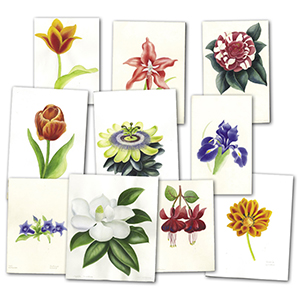 Floral Collection of artwork by Mark Wilkinson