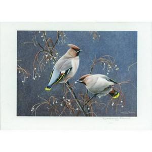 J.Paul Waxwings (76p stamp) Signed Print